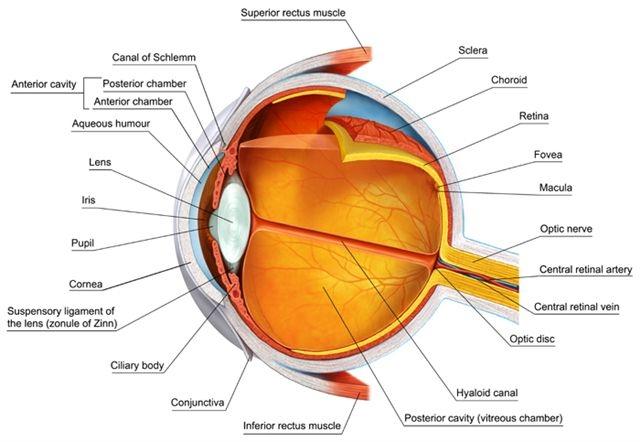 eye-mhjo8uezejrnocblr3rxqxv6ext3di95xoe8a6u7us